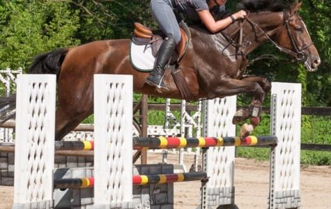 Horse jumper and competitor