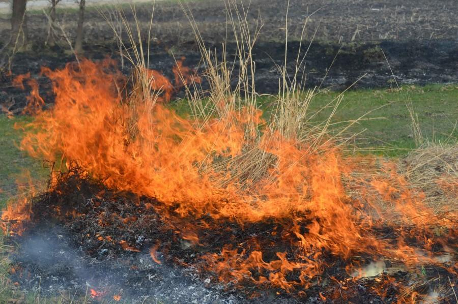 As+the+fire+catches+on+the+prairie+it+turns+kills+off+invasive+species+within+the+prairie.+