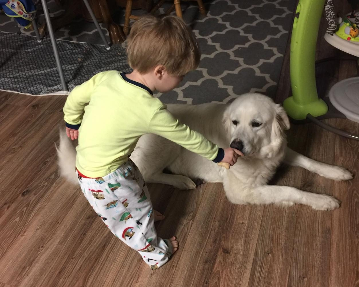 Ethan Prebble continues to share his love with their second foster dog. Just like Sky, Cassie wants all the attention she can get.
