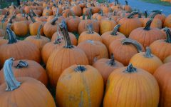 Battle of the pumpkin patches