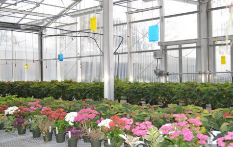Planting Your Way into Horticulture